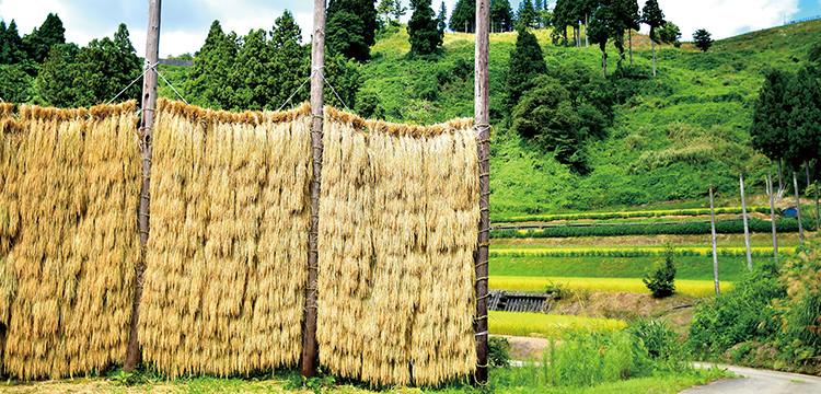 稲架のある風景