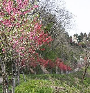 花ももの郷栃尾